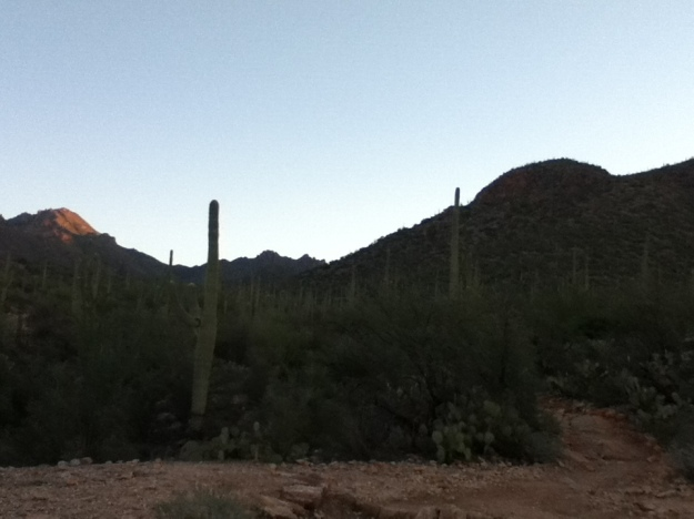 Intrarea in armata de cactusi, inainte de rasarit.