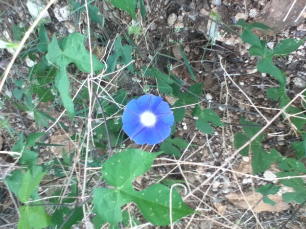 Flori albastre. Incepe sa semene cu un piesaj Disney.